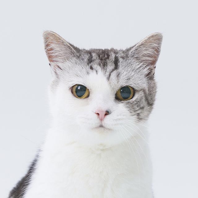 猫の診療 CAT
